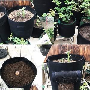 Felt Grow Bag for Potato Plant