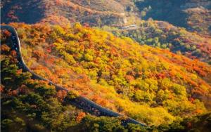 XiangShan Maple Leaf (1)